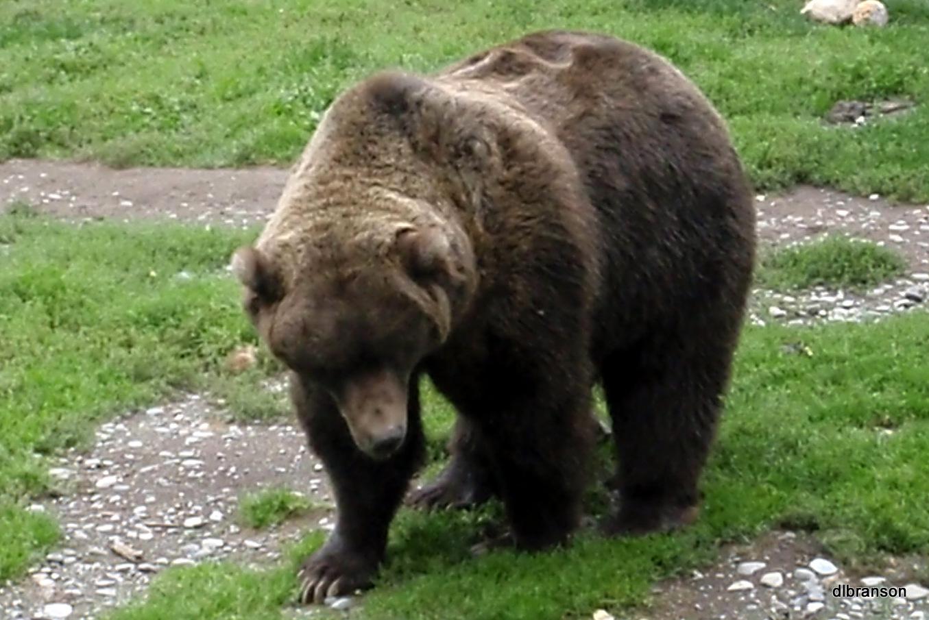 A Bear Hunt Going On a Bear Hunt |...